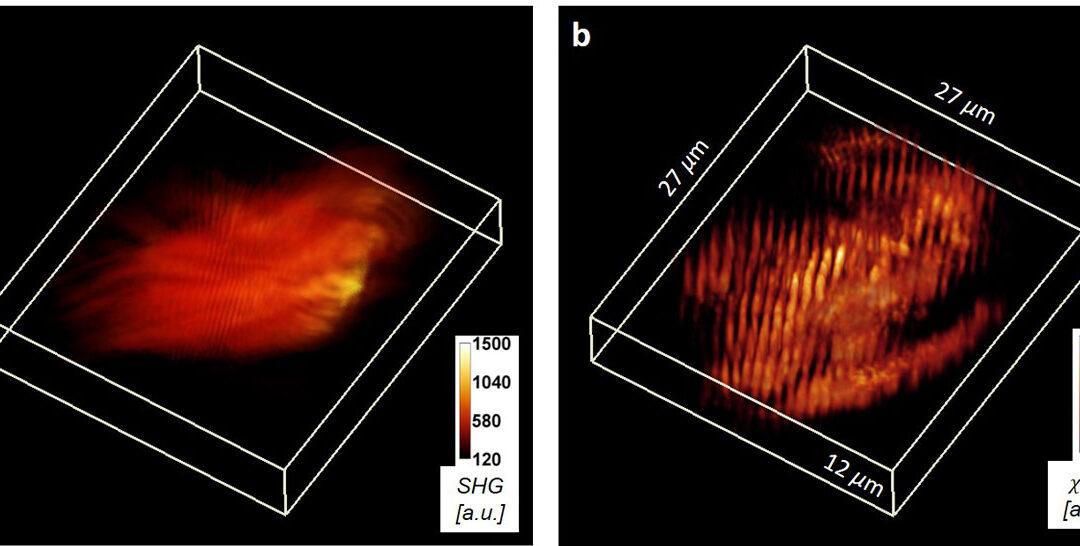 CCIL Member Develops New 3D Imaging Technique