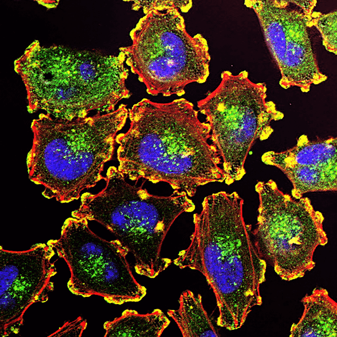 UI cells image